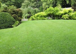 6 Easy Ways To Improve Your Lawn Care Overnight
